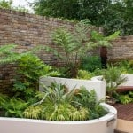 Tree ferns in blackheath garden
