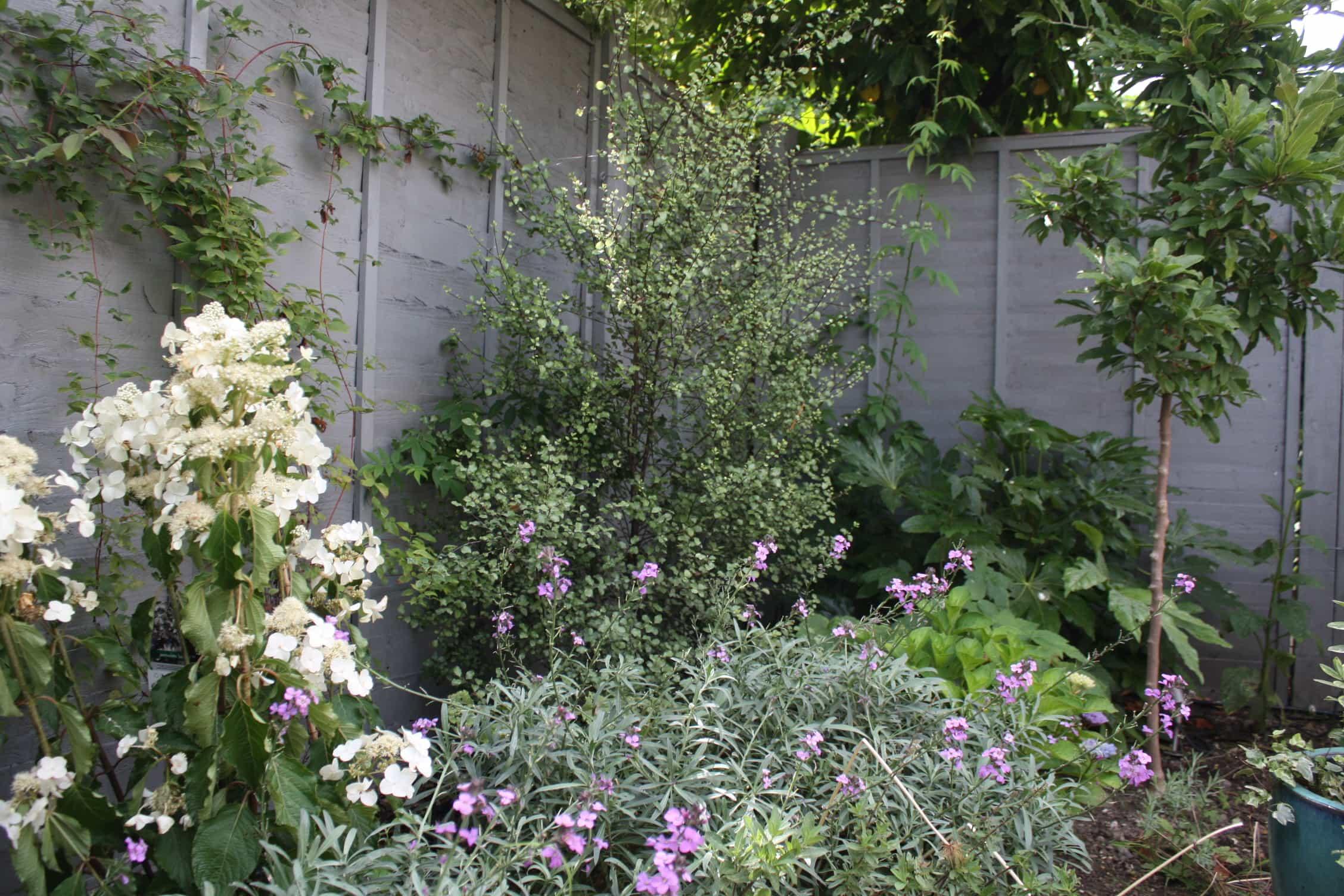 peckham blue garden (3)