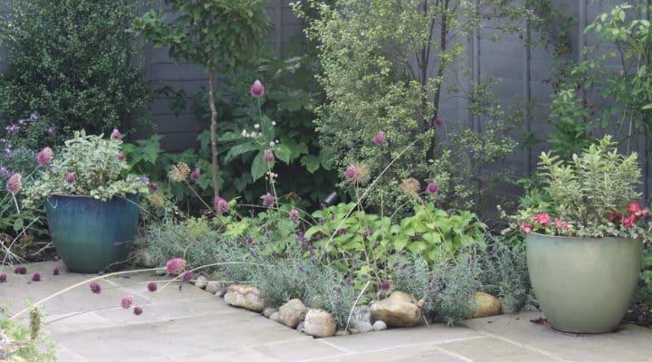 peckham garden july 2016