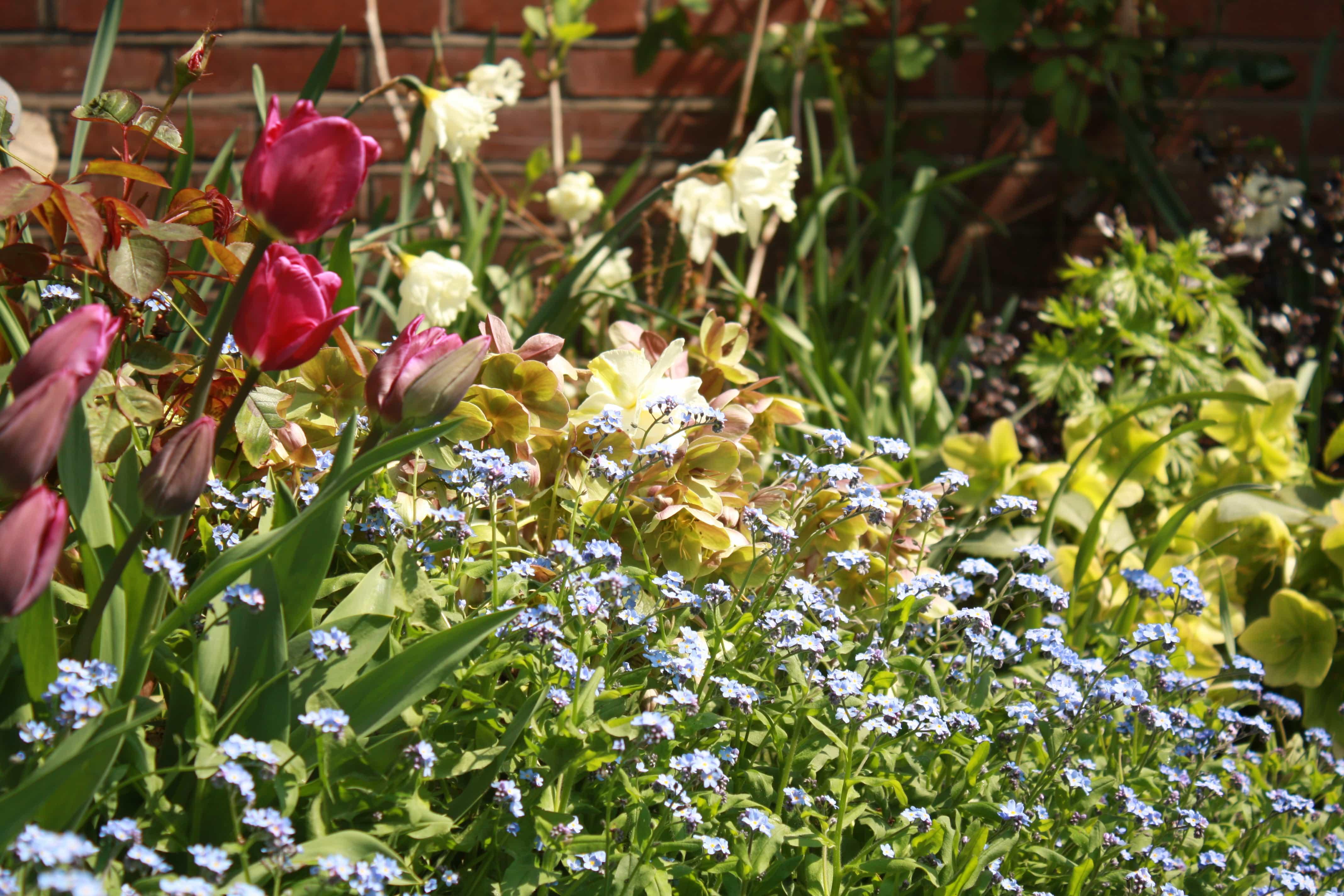 greenwich garden spring flowers